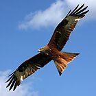 As High as a Kite. by Mark Hughes