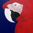 Green Wing Macaw by Joann Barrack