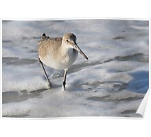SHOREBIRD CAPTIVA Poster