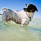 A salty sea dog.... by shellfish