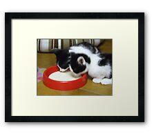 thisty kittens Framed Print