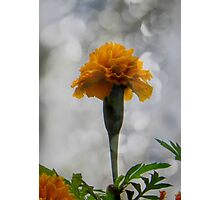 It's a flower... ©  Photographic Print