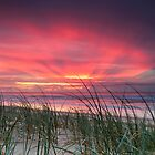 Pink Sunrise - Yaroomba Beach, Qld by Tom Anderson