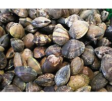 Pike Market Shells Photographic Print