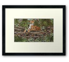 Jaguar on the Rocks Framed Print