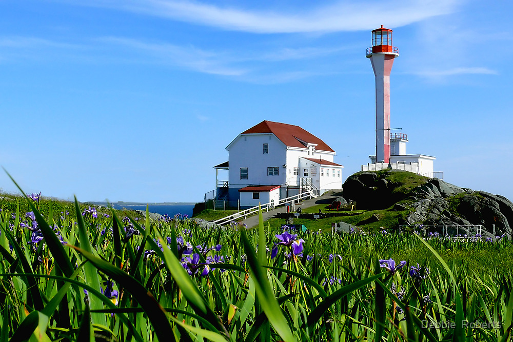Cape Forchu in Irises by Debbie  Roberts