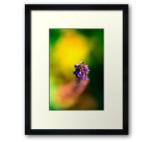 Cavorting with grasshoppers and bumble bees Framed Print