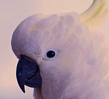 """Good afternoon"" Cockatoo by Toni McPherson"