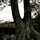 Tree by Lou Wilson
