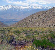 Beautiful Owens Valley by marilyn diaz