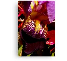 colorful iris abstract #2 Canvas Print