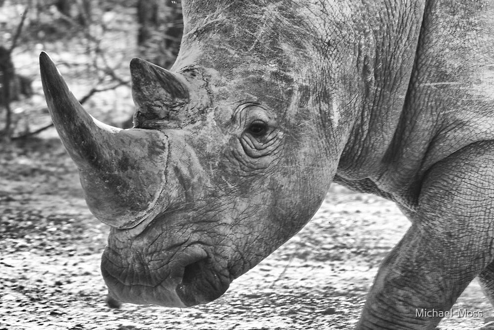 White Rhino by Michael  Moss