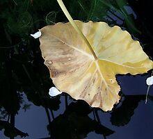 Downside of Autumn by Monnie Ryan