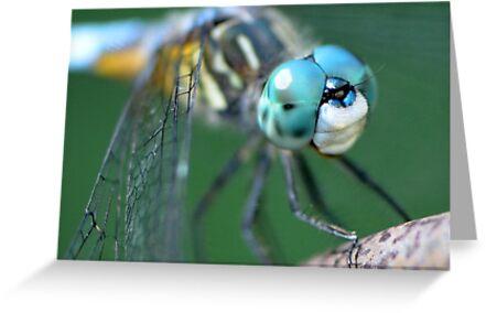 A Dragonfly Friend by Paula Betz