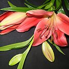 Red Lilies & buds  by EdsMum