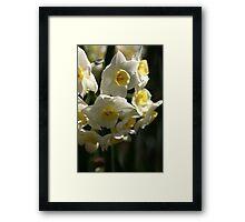 Happy Cluster - Daffodils Framed Print
