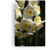 Happy Cluster - Daffodils Canvas Print