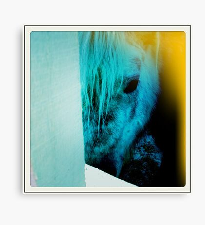 equine eyes Canvas Print