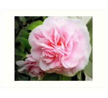 Begonia in Pink Art Print