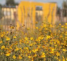 Wildflowers of the Sun by Liana Marnewick