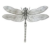Dragonfly by axemangraphics