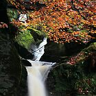 Autumn fall by robevans