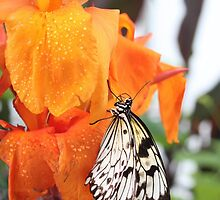 The Nymph on the Canna Lily by missmoneypenny