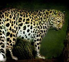 Amur Leopard by Catherine Hamilton-Veal  ©