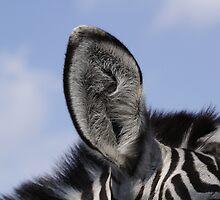 Stripes by Andreas  Berheide