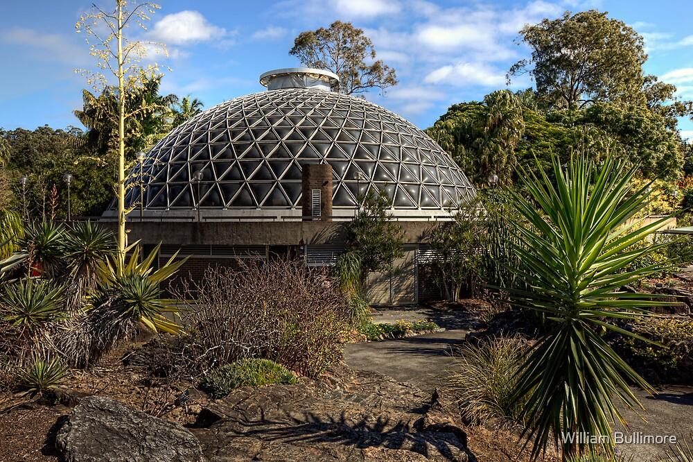 Mt Coot-tha Botanic Gardens • Brisbane • Australia  by William Bullimore