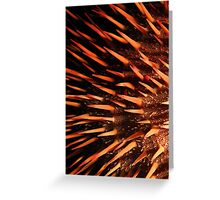 Red crown-of-thorns starfish Greeting Card