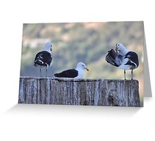 Tres Gaviotas ........................................ Greeting Card