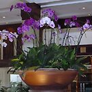 Orchids by machka