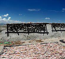 Fish drying in the sun. Ben Da fishing village, Vung Tau, Vietnam by Sheldon Levis