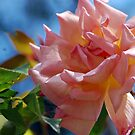 Rosy Pink by Llawphotography
