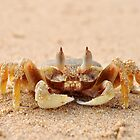 Scurrying Crab by JVGMcGhie