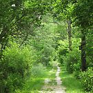 Another Walk In The Woods by lorilee