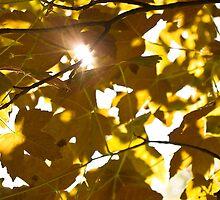 Sun. by Andoroyd