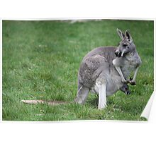 Mummy and Baby Roo. Poster