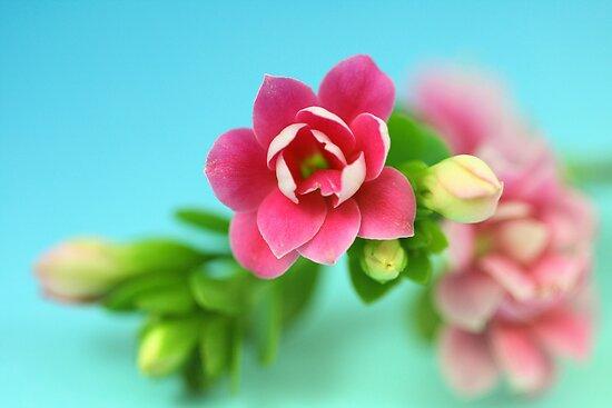 Most beautiful  by Caterpillar