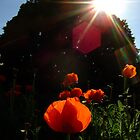 Burst of sunshine at Kew Gardens by Themis