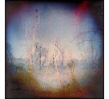 Trees of Metal Photographic Print