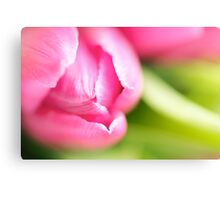 A single pink Tulip with green Canvas Print