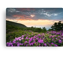 Craggy Gardens Bloom - Rhododendron at Sunset Canvas Print