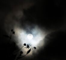 Moon in September by TrendleEllwood