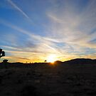 Sunset At Joshua Tree National Park by Ron Hannah