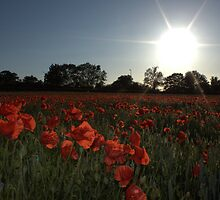 poppy sun set by yampy