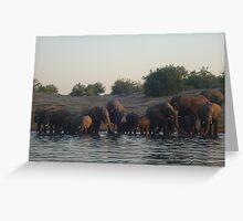 elephants, chobe river, botswana Greeting Card