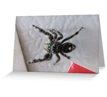 Hi Spidey....On The Refridgerator Greeting Card