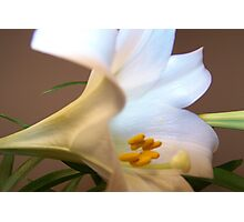 Lily of the Valley 2 Photographic Print